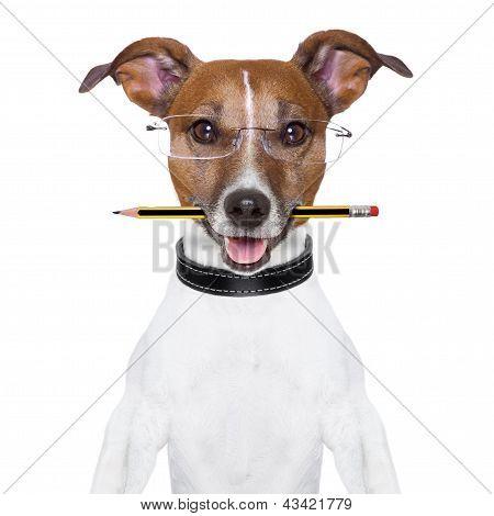 Dog Pencil