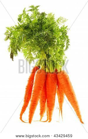 Fresh Carrots Bunch Isolated On White Background