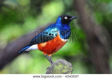 Small Colorfull Bird