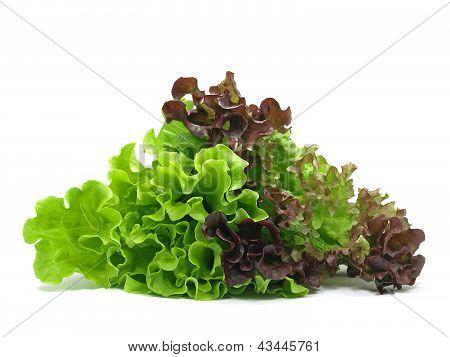 Lollo Rosso And Batavia Lettuce