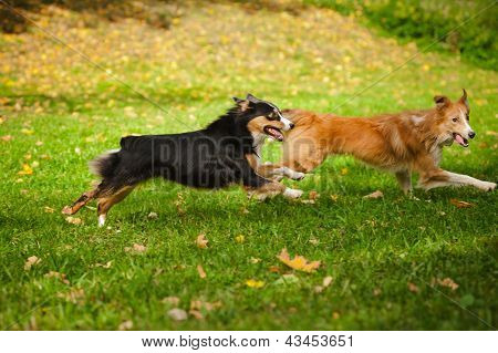 zwei lustige Hunde spielen zusammen
