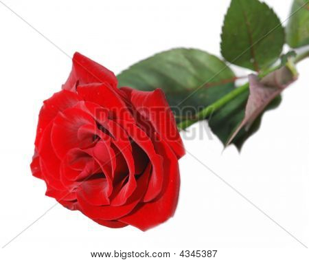 Macro Image Of Dark Red Rose