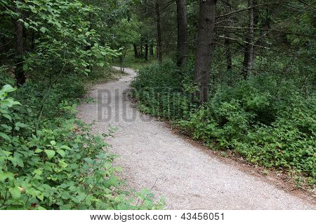 Path in the Pinery