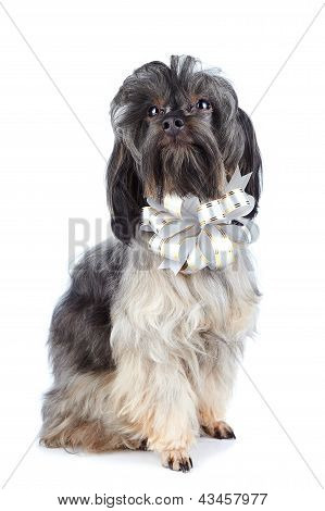 Decorative Doggie With A Bow.