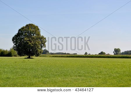 Landscape with tree.