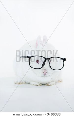 Weißer Hase mit menschlichen Brille auf weißem Hintergrund