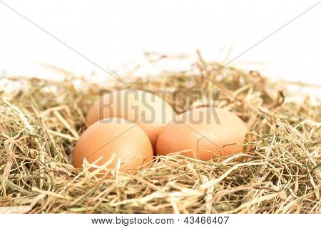 Three eggs nestled in straw on white background