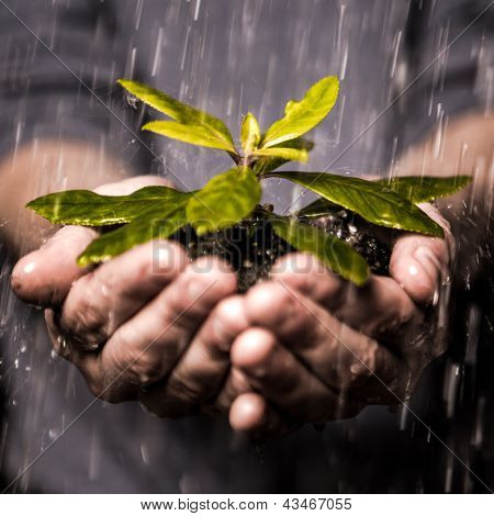 Close up of hands holding seedling and soil growing in the rain