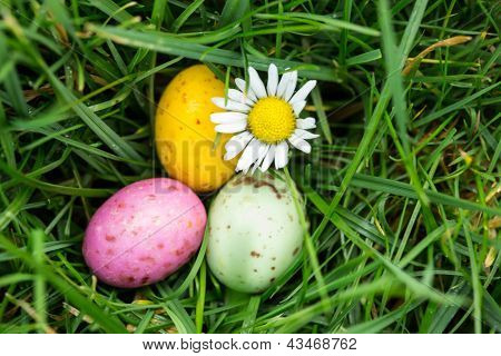 Small colourful easter eggs nestled in the grass with a daisy