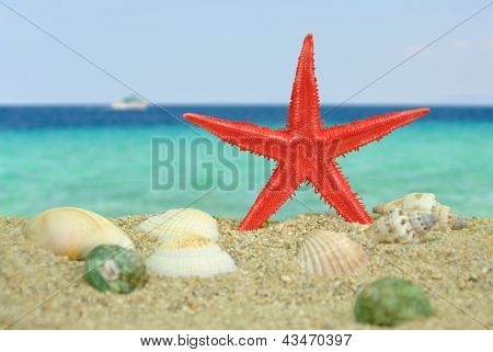 Red Starfish On Beach