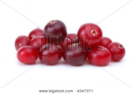 Close-up Shot Of Some Cranberries
