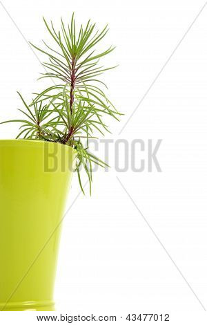 Houseplant Growing In A Flowerpot