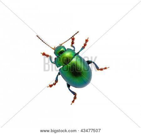 Grüne Käfer isoliert auf weißem Hintergrund