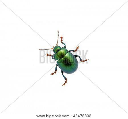 Grüne Käfer