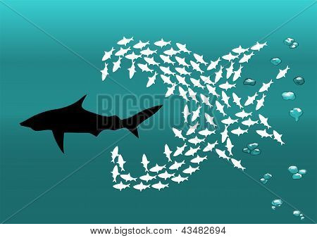 Flock Of Small Fish And Shark