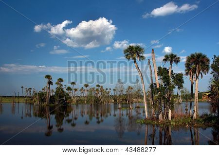 Marshland with Palm Trees