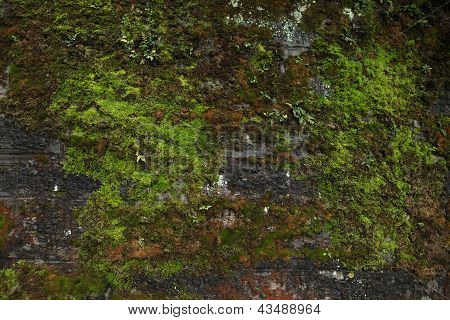 Old Wall Covered With Beautiful Natural Pattern Of Moss In The Wudang Mountains