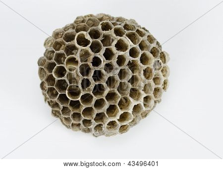 Bee's Nest on White Background