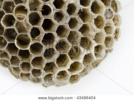 Gray Bee's Nest on White Background