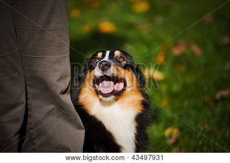 Young Black Australian Shepherd Training