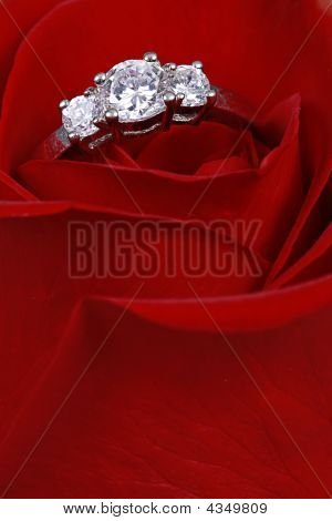 Ring In Red Rose, Closeup