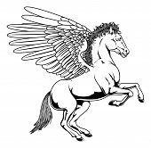 picture of winged-horse  - Pegasus horse with wings rearing on its back legs in black and white outline - JPG