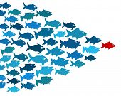 foto of directional  - Fishes in group leadership concept - JPG