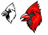 picture of cardinals  - Red cardinal bird head in cartoon style - JPG
