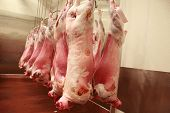 stock photo of slaughterhouse  - Lamb carcasses hanging in an abattoir - JPG