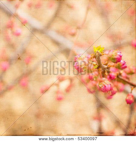 Artistic Pink Spring Buds