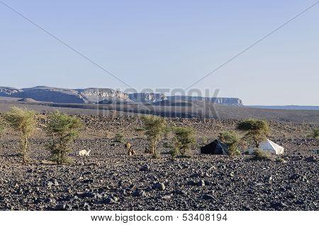 Black And White Tents In Hamada Du Draa (moroccan Stone Desert, Morocco)
