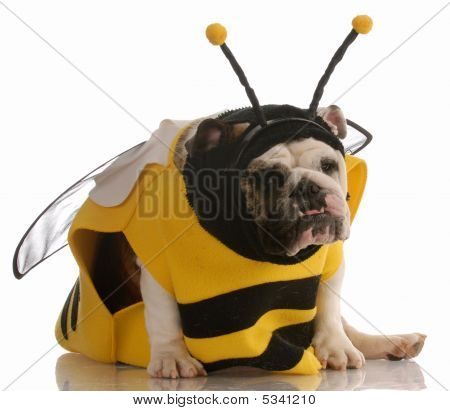 Bulldog Dressed As A Bee