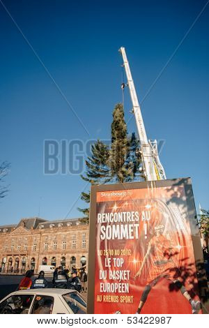 Strasbourg Christmas Tree Erected