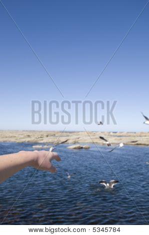 Segulls And Ocean