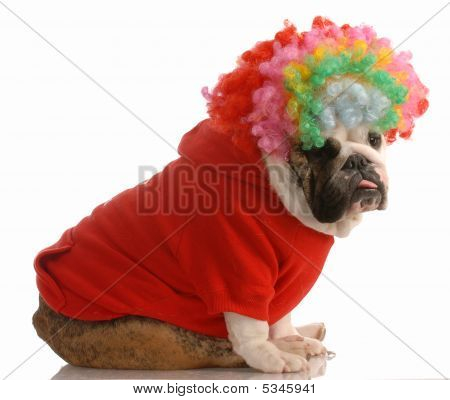 English Bulldog Dressed As A Clown