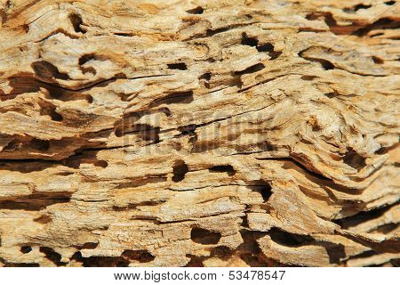 Wood Background and Texture - Termite damage that creates an abstract work of art