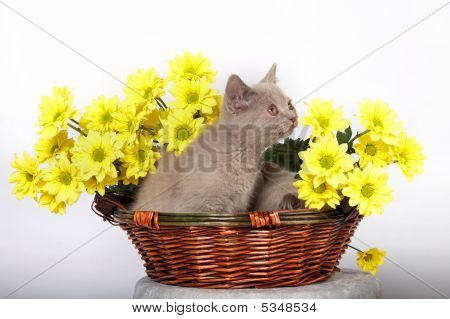 Kitten In A Large Golden Trophy