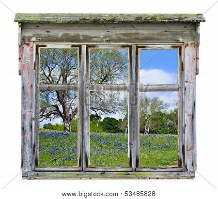 Old window frame with Texas bluebonnet vista