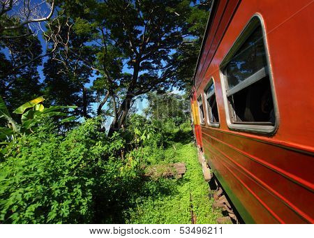 Train throught green tropical forest. Sri Lanka