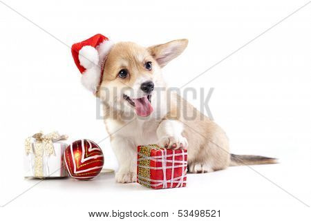puppy in a Santa Claus hat and present