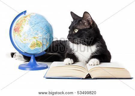 Black Cat With A Globe, A Book
