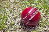 image of cricket  - bright red cricket ball on patchy grass lawn - JPG