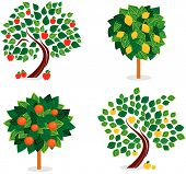 stock photo of apple tree  - four trees with different fuits like apples - JPG