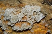 pic of crystallography  - Druze gypsum crystals in the cave Ukraine - JPG