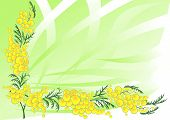 stock photo of mimosa  - Illustration of abstract mimosa branch with background - JPG