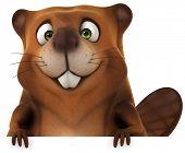 stock photo of muskrat  - Beaver - JPG