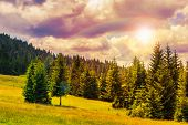 pic of coniferous forest  - coniferous forest on a steep mountain Slope - JPG