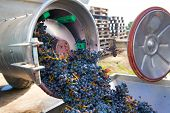 image of crusher  - corkscrew crusher destemmer in winemaking with cabernet sauvignon grapes - JPG