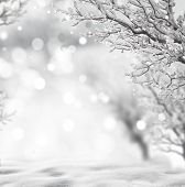 pic of snow forest  - winter background - JPG