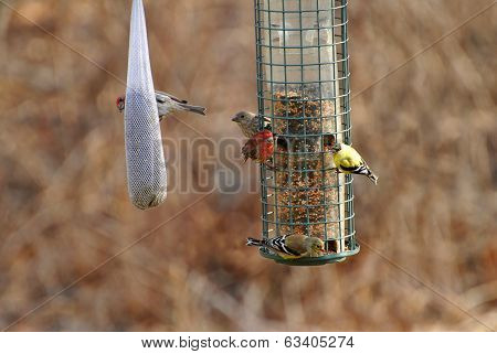Busy Bird Feeder Eary In Spring